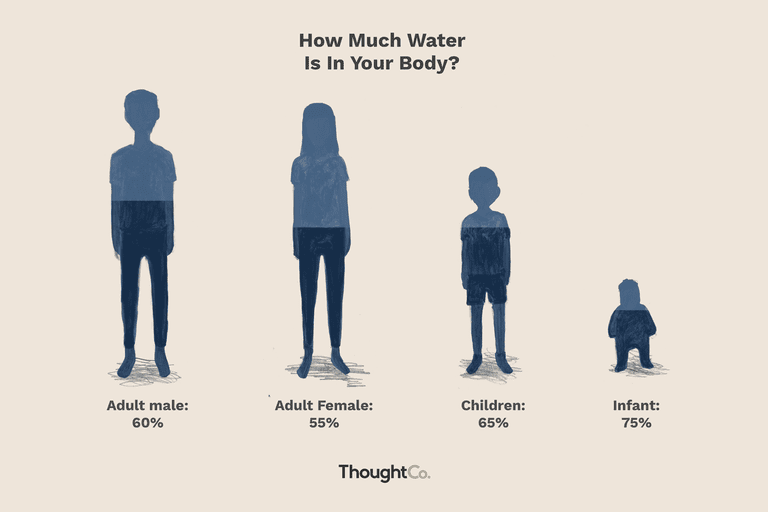 TC_609406-how-much-of-your-body-is-water-5aa986dc04d1cf00360706df.png